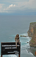 A monkey sitting on a sign at the cliffs of Ulawati in Bali, Indonesia.