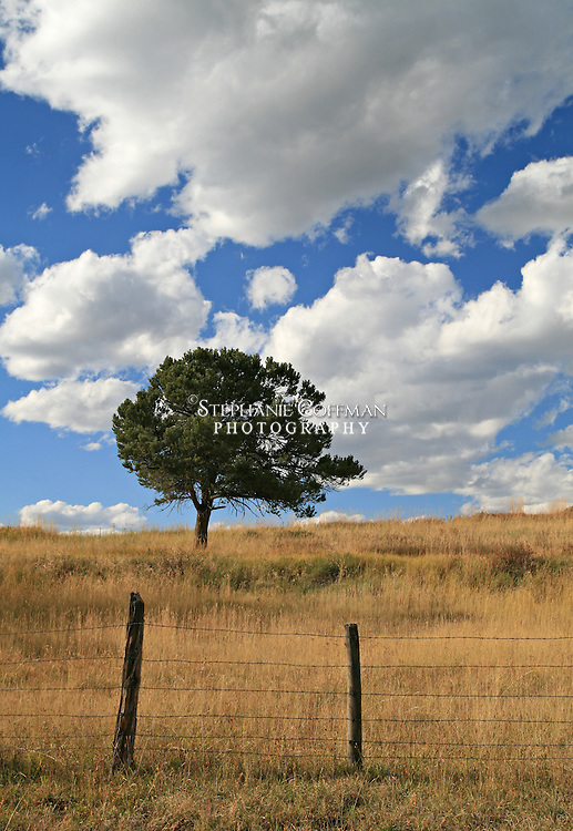 The tree stands alone in the wind on an autumn day in Ridgway, Colorado