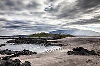 Punta Espinosa, Fernandina Island in the Galapagos
