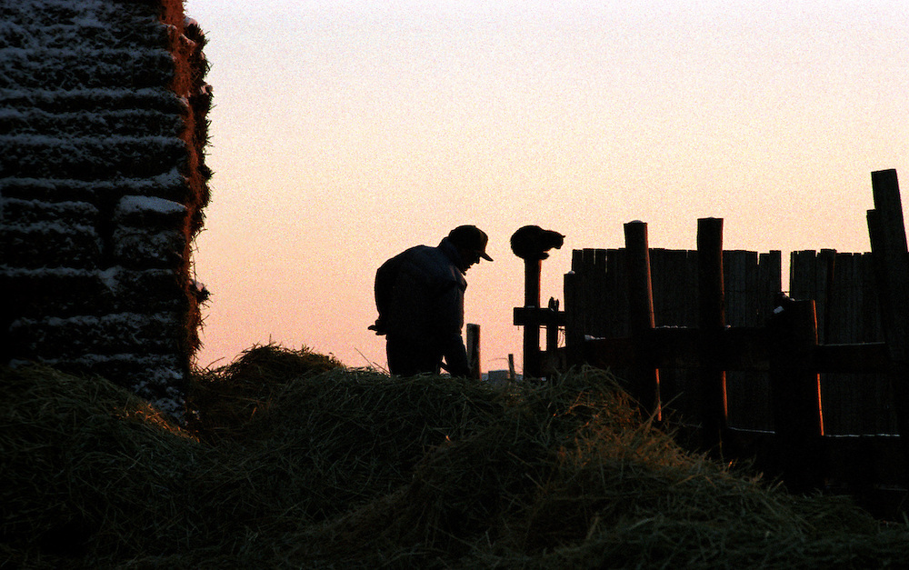 A cat sits on a fence post as a farmer feeds hay to his cattle silhouetted against the Colorado evening sky