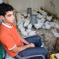 Boy selling live poultry in the souk, Tetouan, Morocco
