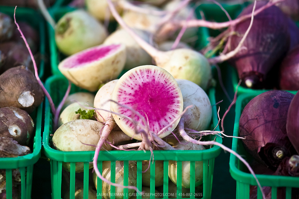 Watermelon radish or Red Meat or Red Heart radish  (Raphanus sativus).