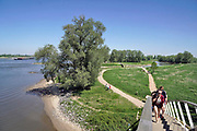 Nederland, Nijmegen, 6-5-2018 Warme zomerse dag op het Waalstrand van Nijmegen in de Ooijpolder, makkelijk te bereiken via de voetgangersbrug Ooijblik die hier ligt. Het zwemmen in de rivier de waal, rijn, is gevaarlijk vanwege de veraderlijke stroming en de drukke scheepvaart. Veel mensen maken een wandeling door de ooijpolder . Wilde paarden, koniks, lopen langs het water . Er is een kleine nevengeul gegraven met een voetgangersbruggetje eroverheen zodat het gebied nog meer natuurwaarde heeft gekregen .Foto: Flip Franssen