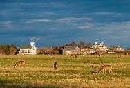 Deer, Wainscott, NY