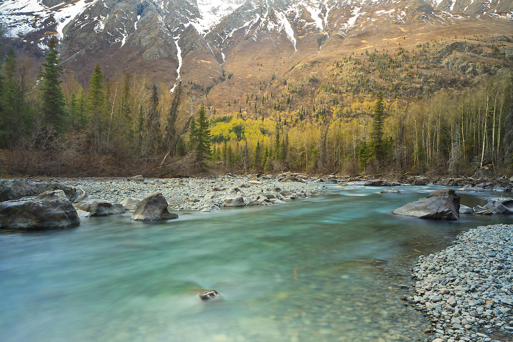The greens of spring begin to come out in the valley along Eagle River while snow remains in the Chugach Mountains at the Rapids in Chugach State Park in Southcentral Alaska. Afternoon.