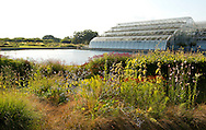 Autumn borders around the pond and glasshouse at RHS Wisley, Woking, Surrey, UK