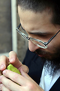 Israel, Jerusalem, Me'a She'arim, Orthodox Jew examining the Etrog to verify its quality. Of the many symbols associated with Sukkot the most important are the Four Species. For any of the 4 species to be used for the religious ritual they must be up to speck.