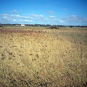 Reed beds wetland ecosystem, Butley Creek, Suffolk, England