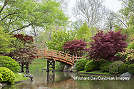65021-03804 Japanese Garden in spring,  Missouri Botanical Garden, St Louis, MO