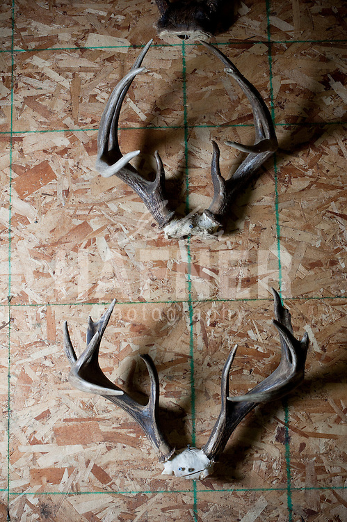 saskatchewan, canada, northway outfitters, whitetail, 2013