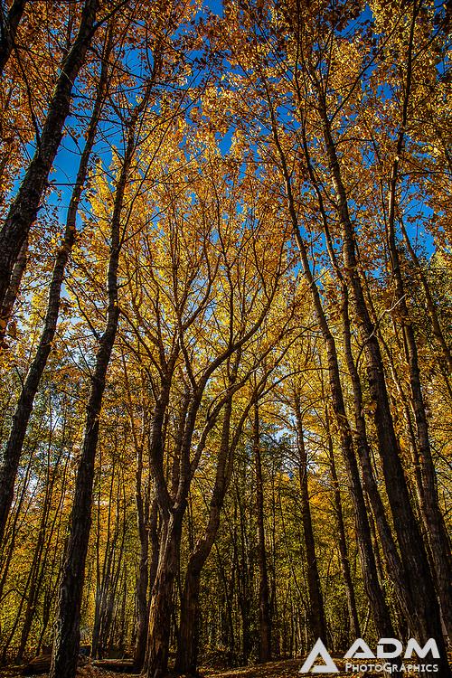 Autumn colors near Knik River, late summer, morning