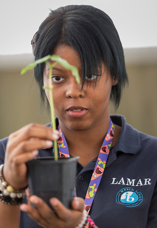 Agriculture students work on a project at Lamar High School, September 23, 2014.