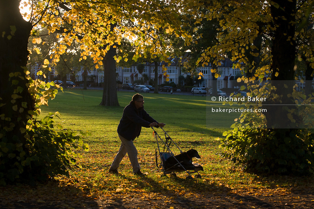A man pushes a dog, sitting in a child's pushchair through an Autumnal park.