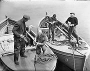 "Carna.  Boat Building with the Cloherty family..14th May 1959 Back in the still of the harbour at Ard Thiar, Carna, Co. Galway, these lobster fishermen examine their catch. here the owners of the ""Cailin"" and the ""MacDara"", Seosamh O Connaighle (left) with his helper Sean Og Mac Domchadha and Sean Mac Donnchadha and his son Seosamh sort through their catch.<br />