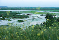 Danube Delta landscape, Somova-Parches, close to Somova village, upper Danube Delta, Romania.