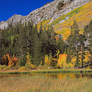 Weir Lake Fly Fisherman Wide View -  Fall Color