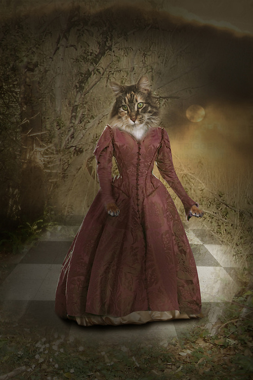 cat with human dress standing outside on a tiled floor and a moon shining down