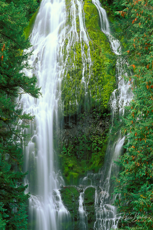 Proxy Falls, Cascade Mountains, Willamette National Forest, Oregon
