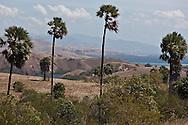 Indonesia, Komodo island,  Rinca island , in Komodo national park