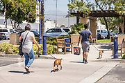 People Walking Their Dogs Downtown Azusa