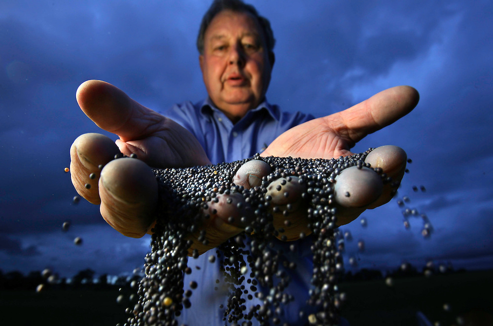Farmer Geoffrey Carracher who is against Genetic Modification with some canola seed thats been cross contaminated with genetically modified seed   .Pic By Craig Sillitoe SPECIALX 000 This photograph can be used for non commercial uses with attribution. Credit: Craig Sillitoe Photography / http://www.csillitoe.com<br />
