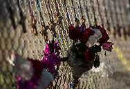 A small makeshift memorial, containing 17 small wooden crosses honoring the people that were killed during a mass-casualty shooting at Marjory Stoneman Douglas High School, hangs on a fence under the Sawgrass Expressway on Thursday, Feb. 15, 2018, across from the entrance to the school in Parkland. (XAVIER MASCAREÑAS/TREASURE COAST NEWSPAPERS)