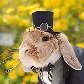 World's most stylish bunny
