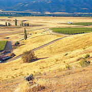 Mondillo Winery & Vineyards Otago
