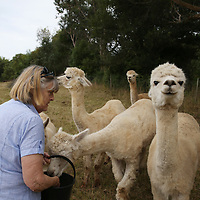 Summerhill Farm Alpacas