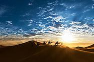 Caravan in the desert during sunrise against a beautiful cloudy sky, Erg Chebbi, Merzouga, Morocco.