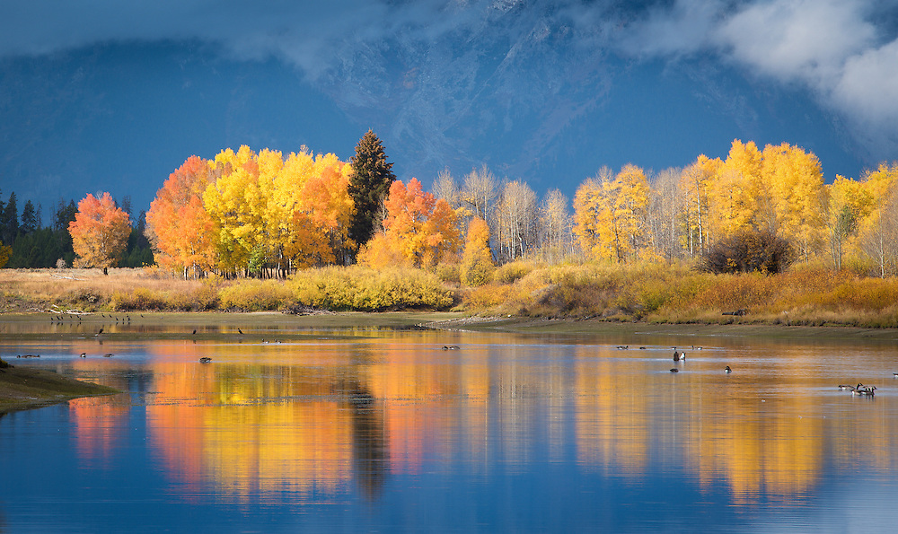 Fall colors reflect in the still water of the Grand Tetons