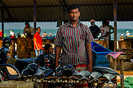 A tuna seller looking strait at the camera at the Negombo Fish market, Negombo, Sri Lanka. This fish market is the second largest fish market in Sri Lanka. It is situated near the Old Dutch Fort Gate and held every day except Sundays