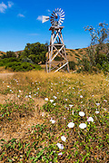 Windmill and wildflowers at Scorpion Ranch, Santa Cruz Island, Channel Islands National Park, California USA