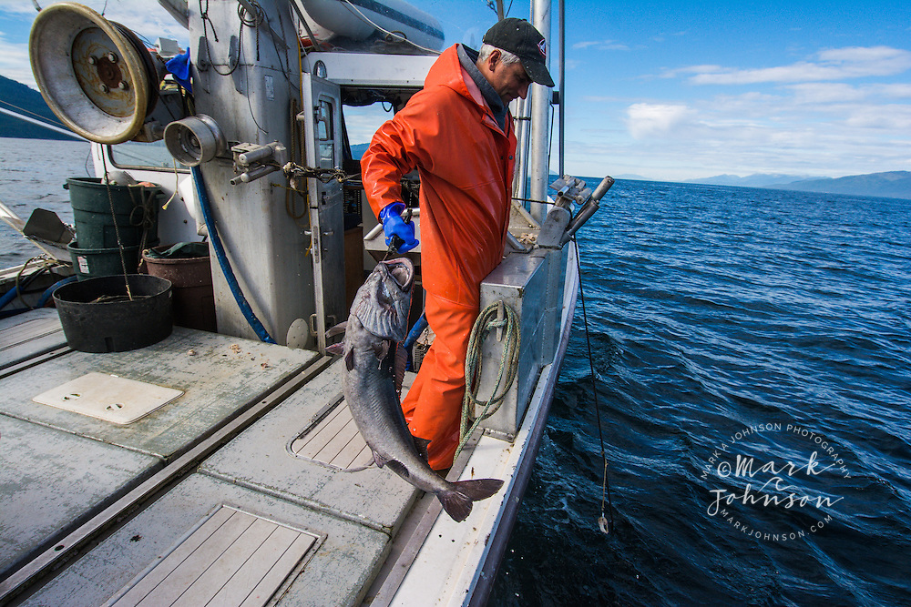 Commercial fishing for Black Cod or Sable Fish, Chatham Strait, Southeast Alaska, USA