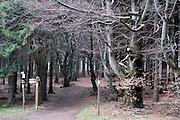 Buchenwald auf dem Taufstein, Vogelsberg, Hessen, Deutschland