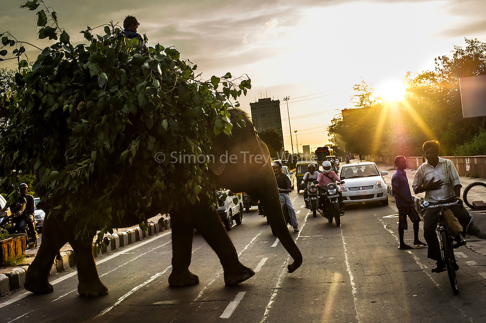 4th September 2014, New Delhi, India. An elephant loaded with fodder pillaged from the city's trees is ridden by a handler  across a busy road as a passing cyclist clasps his hand to his chest in veneration, New Delhi, India on the 4th September 2014. Elephants are revered in India due to their enshrinement in many and various religious traditions and beliefs. <br />