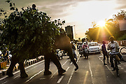 4th September 2014, New Delhi, India. An elephant loaded with fodder pillaged from the city's trees is ridden by a handler  across a busy road as a passing cyclist clasps his hand to his chest in veneration, New Delhi, India on the 4th September 2014. Elephants are revered in India due to their enshrinement in many and various religious traditions and beliefs. <br /> <br /> Elephant handlers (Mahouts) eke out a living in makeshift camps on the banks of the Yamuna River in New Delhi. They survive on a small retainer paid by the elephant owners and by giving rides to passers by. The owners keep all the money from hiring the animals out for religious festivals, events and weddings, they also are involved in the illegal trade of captive elephants.The living conditions and treatment of elephants kept in cities in North India is extremely harsh, the handlers use the banned 'ankush' or bullhook to control the animals through daily beatings, the animals have no proper shelters are forced to walk on burning hot tarmac and stand for hours with their feet chained together. <br /> <br /> PHOTOGRAPH BY AND COPYRIGHT OF SIMON DE TREY-WHITE<br /> + 91 98103 99809<br /> email: simon@simondetreywhite.com photographer in delhi