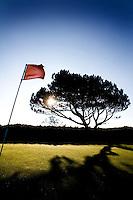 ZANDVOORT - De golfbaan van de Kennemer Golfclub, waar ook in 2008 het Dutch Open voor mannen zal worden gehouden. Op de foto: De boom op C3