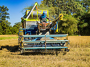 "08 DECEMBER 2015 - KO WAI, NAKHON NAYOK, THAILAND: A worker drives a rice harvesting machine through a paddy during the rice harvest in Nakhon Nayok province, about two hours north of Bangkok. Thai agricultural officials expect rice prices to go up by as much as 15% as global production of rice is cut by the Pacific Ocean El Niño weather pattern. Thailand's rice production is expected to drop in the coming year. Persistent drought has reduced the main crop, currently being harvested, and the military government has ordered farmers not to plant a second crop of ""dry season"" rice to conserve Thailand's dwindling supply of water. Thailand's water reservoirs are at their lowest seasonal levels in recent memory and little rain is expected during the dry season, which lasts until June.    PHOTO BY JACK KURTZ"