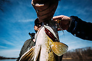 Fly fishing for smallmouth bass on the Kankakee River with Captain Will Winans of Big River Fly Fishing.<br /> <br /> www.AdamAlexanderPhoto.com