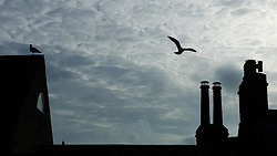 © Licensed to London News Pictures. <br /> 15/03/2015. <br /> <br /> Whitby, United Kingdom<br /> <br /> Seagulls fly around chimney pots on houses in Whitby in North Yorkshire.<br /> <br /> Photo credit : Ian Forsyth/LNP
