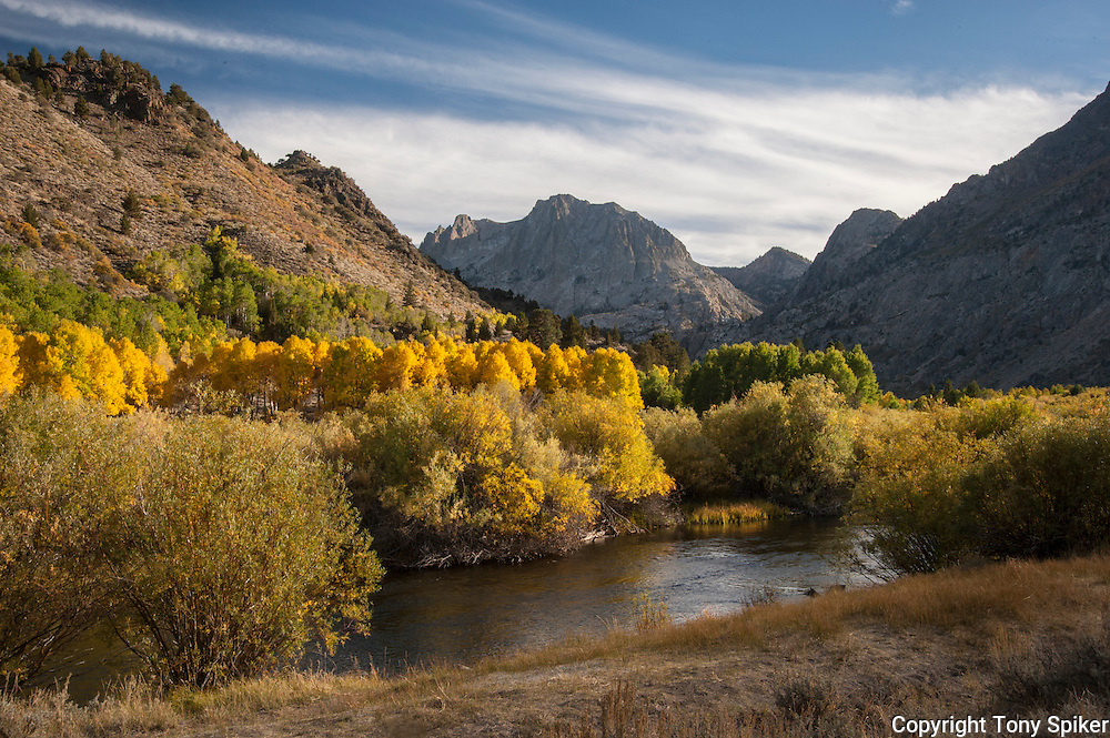 """June Lake Fall 1"" - The aspen begin to change along Rush Creek in the Eastern Sierras."