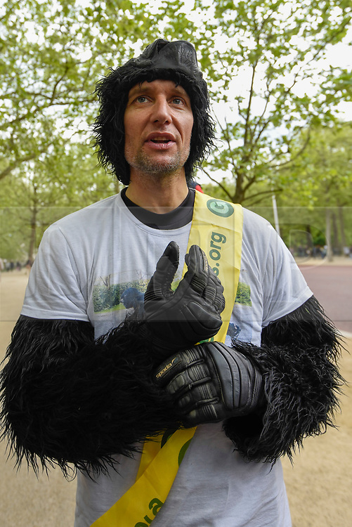 "© Licensed to London News Pictures. 29/04/2017. London, UK. Met Police officer Tom Harrison, 41, known as ""Mr Gorilla"", celebrates after finally completing the London Marathon after six days of crawling and raising £23,900 for The Gorilla Organisation.   Photo credit : Stephen Chung/LNP"
