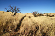 Grasslands along Gardner Canyon Road, north of Sonoita, Arizona, USA.