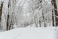 Snow covered Mont Royal Park in Winter, Parc du Mont Royal, Montreal, Quebec, Canada