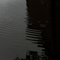 tree shadow on water