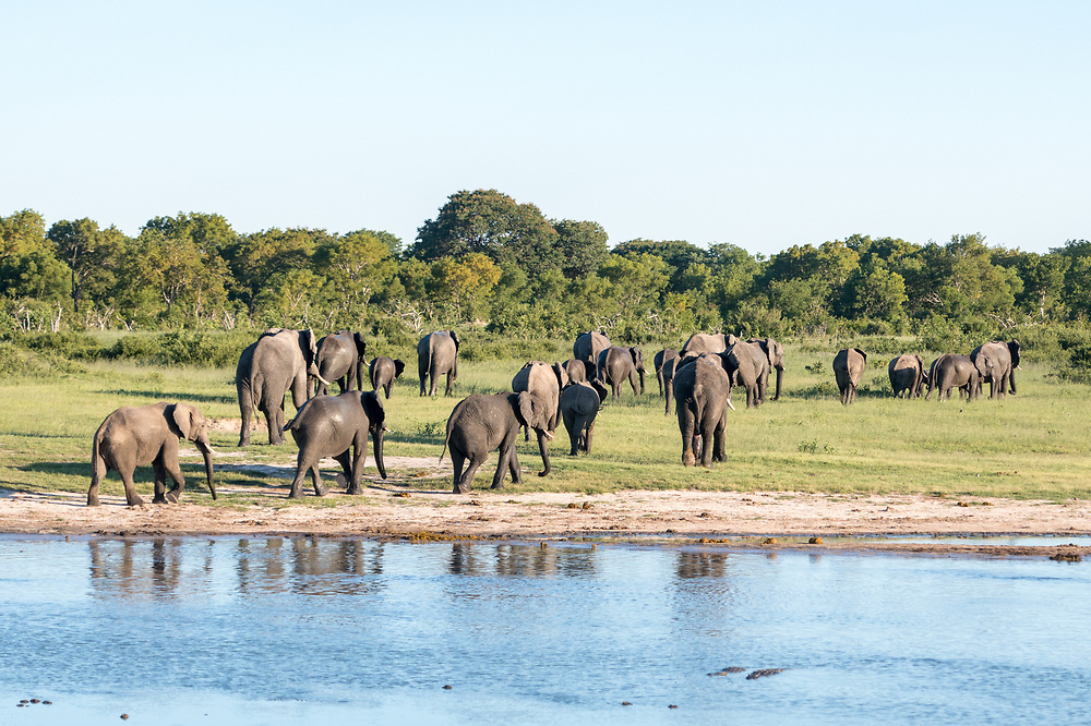 A family of elephants leaving a watering hole in Hwange National Park. Hwange, Zimbabwe.