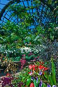 Interior, Botanical,  Garden, Balboa Park, San Diego, Ca