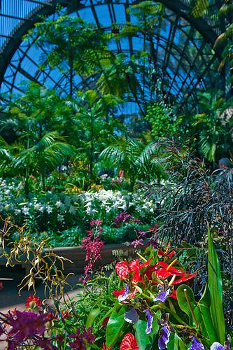 Interior, Botanical, Garden, Balboa Park, San Diego, Ca.
