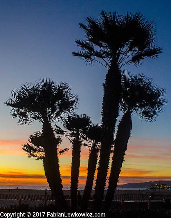 palm trees, sanata monica beach, sunset, december 18, 2017